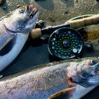 The Fishing News
