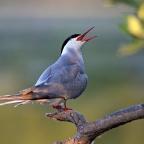 Confessions of a Casual Birder